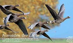 Niederrhein Bilder Fotografie Tiere